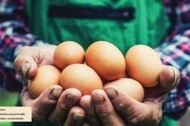 Niži PDV na jaja čuva domaću proizvodnju