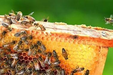 Pčelarstvo - pravilnici