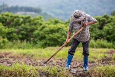 Upis u Registar osiguranika poljoprivrednika